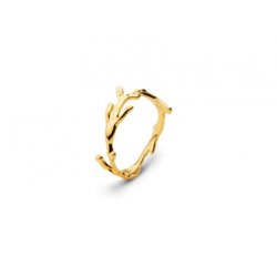 Algae Ring