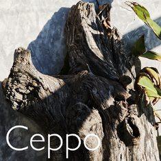 Nasce la collezione Ceppo, ispirata dalla forza vitale del legno della vite, dalla quale prende la sua texture preziosa. Scoprila su: https://www.sohasardinia.com/it/  #cannonauACE #antiage #sohasardinia #beautyproducts #beauty #beautyroutine #dailyroutine #skincareroutine#beautytips #beautylover #naturalproducts#parabenfree #siliconfree #fedeltapp #giveback