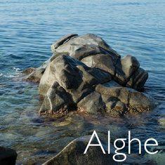 Ingrediente chiave di alcuni dei best seller Soha, le alghe diventano protagoniste della nostra nuova collezione di gioielli. Visita il nostro sito per saperne di più.  https://www.sohasardinia.com/it/  #sohabijoux #sohasardinia #beautyproducts  #beauty #beautyroutine #dailyroutine #skincareroutine  #beautytips #beautylover #naturalproducts  #parabenfree #siliconfree #fedeltapp #giveback